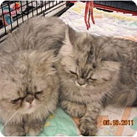 Adopt A Pet :: Katie & Teddy - Riverside, RI