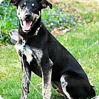 Adopt A Pet :: Baxter!!!!  Rescue Favorite!! - Haverhill, MA