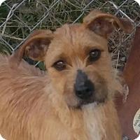 Adopt A Pet :: Sadie - Brattleboro, VT