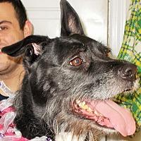 Adopt A Pet :: Bonnie - Plain City, OH