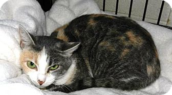 Domestic Shorthair Cat for adoption in Rootstown, Ohio - Momma Cat - Courtesy Post
