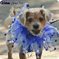 Adopt A Pet :: Watson - Charlotte, NC