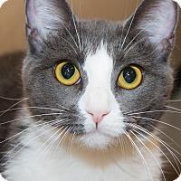 Adopt A Pet :: Willa - Irvine, CA