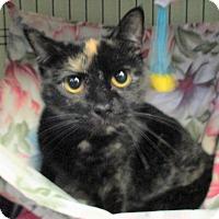 Adopt A Pet :: Natalie - Reeds Spring, MO