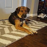 Adopt A Pet :: Sadie - Ft Worth, TX