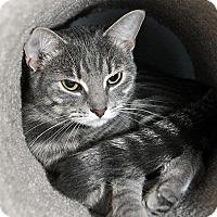 Adopt A Pet :: July - Fort Leavenworth, KS