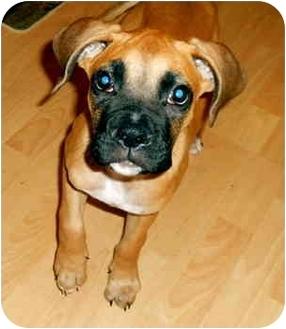 Boxer Mix Dog for adoption in Thomasville, Georgia - Cooper