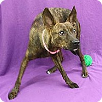 Adopt A Pet :: Corkee - Broomfield, CO