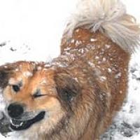 Adopt A Pet :: Delilah - Justin, TX