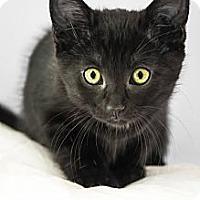 Adopt A Pet :: Tootsie - Montreal, QC