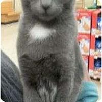 Adopt A Pet :: Jibby - Reston, VA