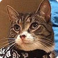 Adopt A Pet :: Sheba - Winchester, CA