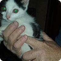 Adopt A Pet :: 1Daniel - Delmont, PA