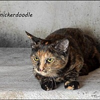 Adopt A Pet :: Snickerdoodle - Trexlertown, PA