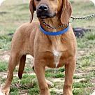 Adopt A Pet :: Wendell ADOPTION PENDING