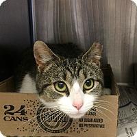 Adopt A Pet :: Jersey - East Brunswick, NJ