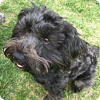 Adopt A Pet :: Tasha - Precious Girl! - Seattle, WA