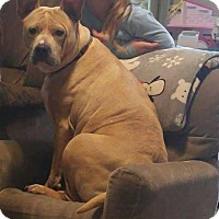Adopt A Pet :: Miss Piggy - Covington, TN
