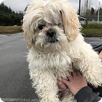 Adopt A Pet :: Poppy - Renton, WA