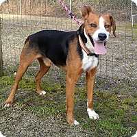 Adopt A Pet :: Hudson - Newport, NC