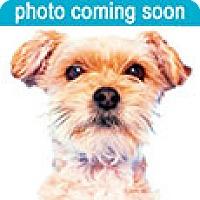 Adopt A Pet :: Porter - Richmond, VA