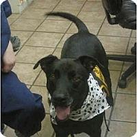 Adopt A Pet :: Pub - Houston, TX
