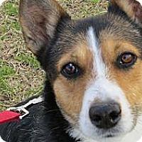 Adopt A Pet :: Sadie Brown - Scottsdale, AZ