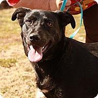 Adopt A Pet :: Gingersnap (In New Eng) (CD) - Brattleboro, VT