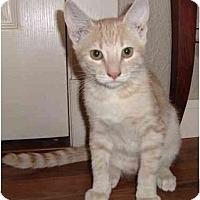 Adopt A Pet :: Rascal - Modesto, CA