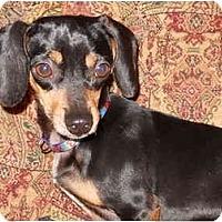 Adopt A Pet :: Charlie - Bryan, TX