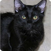 Adopt A Pet :: *Mittens - Winder, GA