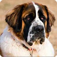 Adopt A Pet :: Sierra - Long Beach, CA