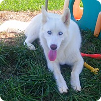 Adopt A Pet :: Omega - Russellville, KY
