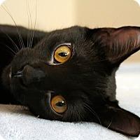 Adopt A Pet :: Zimbabwe - Kirkwood, DE