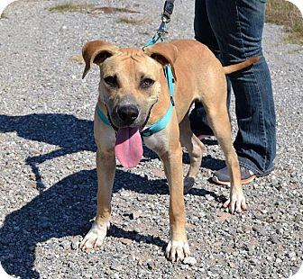 Black Mouth Cur/Hound (Unknown Type) Mix Dog for adoption in Elgin, Oklahoma - Yeller