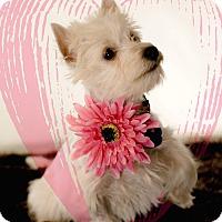 Adopt A Pet :: Esmerelda-Special Needs - Omaha, NE