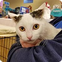 Adopt A Pet :: Hazel - Lombard, IL