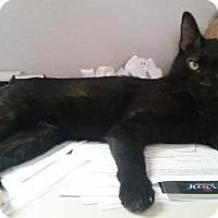 Adopt A Pet :: Korben Dallas - Fort Collins, CO