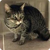 Adopt A Pet :: Ruby 7D43 - Columbus, GA