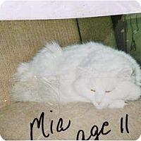 Adopt A Pet :: Mia - Mobile, AL