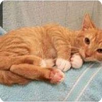 Adopt A Pet :: Ricky - Reston, VA