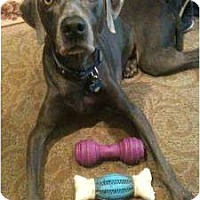 Adopt A Pet :: Sasha - Attica, NY