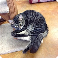 Adopt A Pet :: Pop - Lake Charles, LA