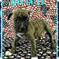Adopt A Pet :: Butch - Toledo, OH