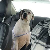 Adopt A Pet :: Dixie - Geneseo, IL