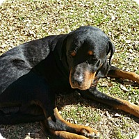 Adopt A Pet :: Gentry - Gilbert, AZ