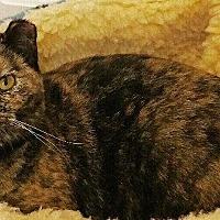 Adopt A Pet :: Autumn - Crossville, TN