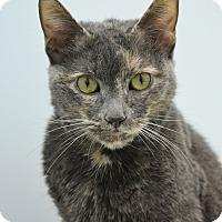 Adopt A Pet :: Claircine - Pine Bush, NY