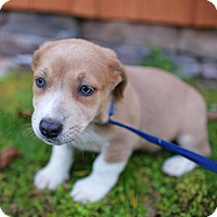 Adopt A Pet :: Aspen - Hagerstown, MD