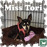 Adopt A Pet :: Miss Tori - Fallston, MD